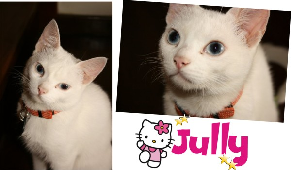 jullyamor
